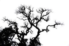 抽象背景结构树 库存图片