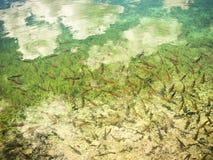 抽象背景结算湖水 免版税库存照片