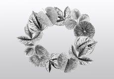 抽象背景绘画水彩热带叶子illustra 免版税库存图片