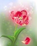抽象背景绿色浅粉红色的郁金香 免版税库存图片