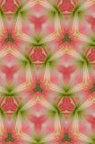 抽象背景绿色粉红色 库存图片