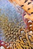 抽象背景美丽的羽毛 免版税库存照片