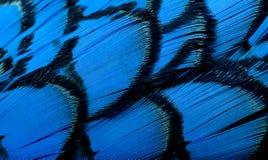 抽象背景美丽的羽毛 库存图片