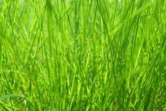 抽象背景自然的草绿色 库存照片
