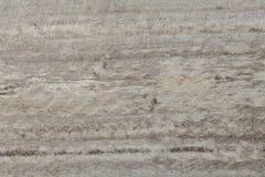抽象背景自然纹理木头 库存图片