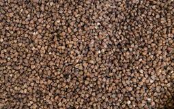 抽象背景荞麦食物纹理 从未加工的荞麦五谷的纹理 健康的食物 顶视图 新鲜的干净的有用的荞麦纹理  免版税库存图片
