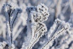 抽象背景蓝色开花雪花向量冬天 库存图片