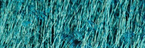 抽象背景蓝色 播种的干燥分支构造了自然本底 库存照片