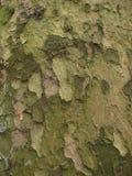 抽象背景褐色绿色 库存图片