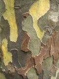 抽象背景褐色绿色 免版税图库摄影
