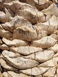 抽象背景详细资料掌上型计算机纹理树干木头 免版税库存照片
