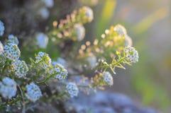 抽象背景雏菊设计花卉新鲜的绿色本质春天夏天野花染黄 免版税库存照片