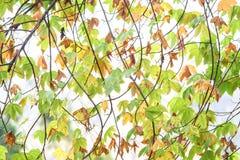 抽象背景黄色和绿色在白色天空的秋天 库存照片