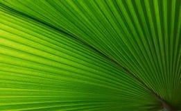 抽象背景,爱好者棕榈叶的对角线 图库摄影