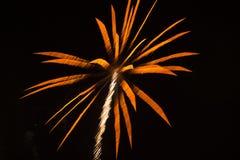 抽象背景:烟花喜欢橙色棕榈Tr 免版税库存照片