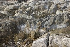 抽象背景 在壳的石头 免版税库存照片