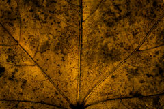 抽象背景黑暗的板簧纹理 免版税库存图片