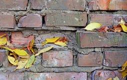 抽象背景 有干燥叶子的一个砖墙 免版税库存照片