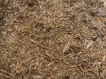 抽象背景-棕色scobs木片锯木屑 免版税库存照片