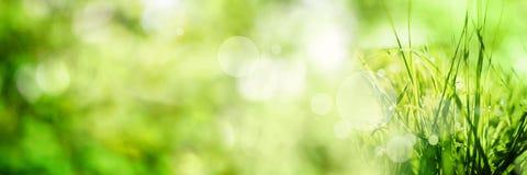 抽象背景bokeh绿色 图库摄影