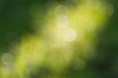 抽象背景bokeh绿色 免版税库存图片