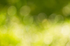 抽象背景bokeh绿色 库存图片