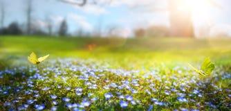 抽象自然春天背景;春天花和蝴蝶 免版税库存照片