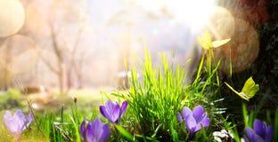 抽象自然春天背景;春天花和蝴蝶 免版税库存图片