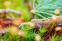 抽象自然森林背景 免版税图库摄影