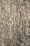 抽象自然石背景 库存图片