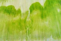 抽象自然纹理背景-在沙滩的绿藻类创造的不规则的样式 免版税库存图片