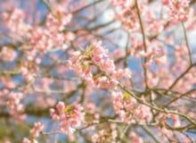 抽象自然背景葡萄酒模糊的照片与花的 免版税库存照片