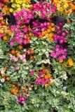 抽象自然背景,墙壁庭院 免版税库存照片