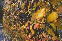 抽象自然自然背景在秋天 胡同在公园 库存照片