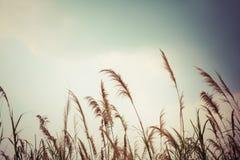 抽象自然草地和天空背景 免版税库存照片