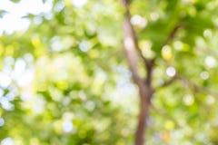 抽象自然,树的绿色bokeh 免版税库存图片