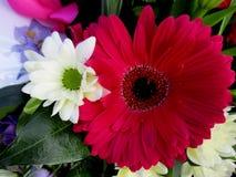 抽象花卉场面 免版税图库摄影
