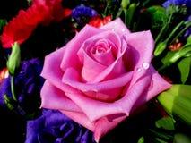 抽象花卉场面 免版税库存照片