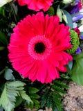 抽象花卉场面 库存图片