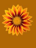 抽象花卉场面 库存照片