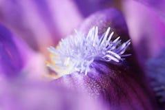 抽象花卉宏观细节 图库摄影