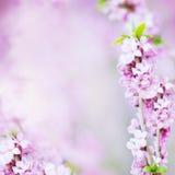抽象花卉开花与花的被弄脏的背景 免版税库存照片