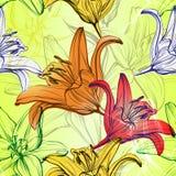 抽象花卉开花的百合背景纹理手拉的传染媒介例证剪影 皇族释放例证