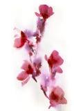 抽象花卉水彩 免版税库存图片