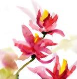 抽象花卉水彩 库存照片