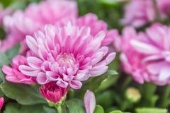 抽象花卉背景,鲜花 免版税库存照片