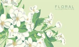 抽象花卉背景 图库摄影
