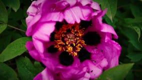 抽象花和宏指令的巨大的瓣