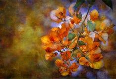 抽象花有橙色背景 免版税库存照片