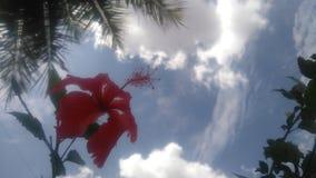 抽象花木槿例证向量 免版税图库摄影
